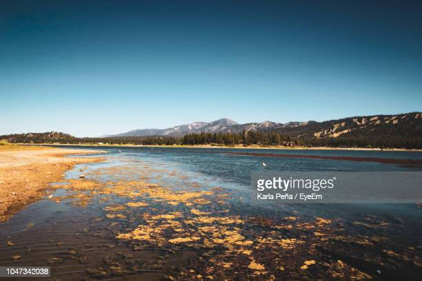scenic view of lake against clear blue sky - big bear lake stock pictures, royalty-free photos & images