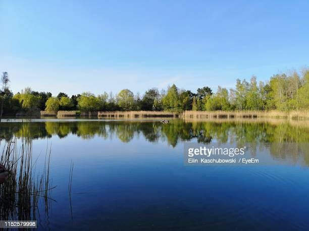 scenic view of lake against clear blue sky - land brandebourg photos et images de collection