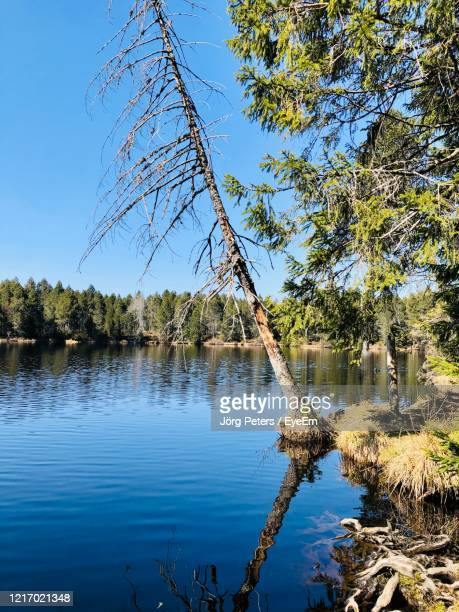 "scenic view of lake against clear blue sky - ""jörg peters"" stock-fotos und bilder"