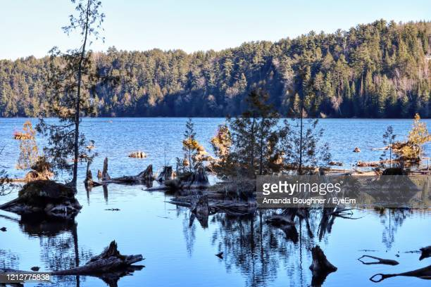 scenic view of lake against clear sky - amanda marsh stock pictures, royalty-free photos & images