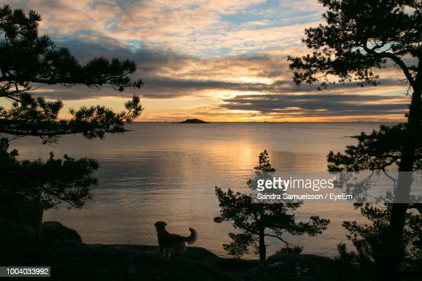 scenic view of lake against cloudy sky during sunset - pawed mammal stock pictures, royalty-free photos & images