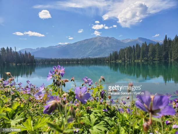 scenic view of lake against cloudy sky - flowering plant stock pictures, royalty-free photos & images