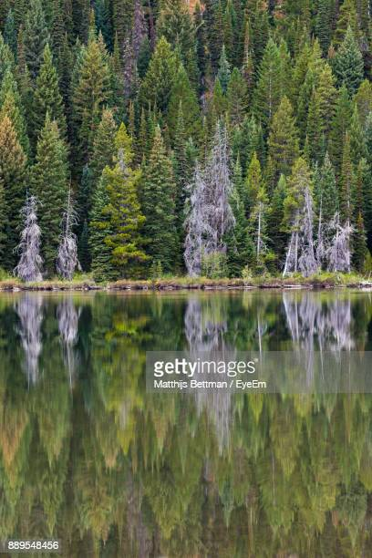 Scenic View Of Lake Against Forest