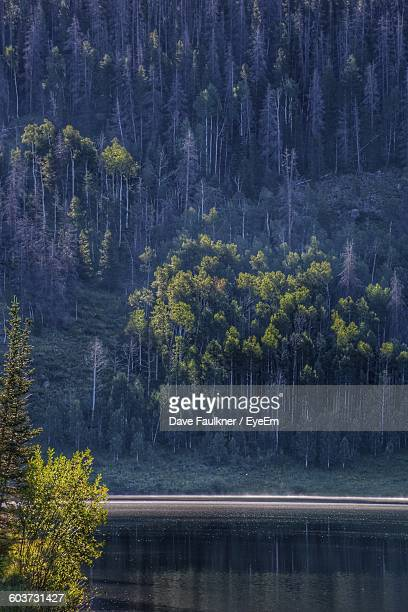 scenic view of lake against mountain with trees - dave faulkner eye em stock pictures, royalty-free photos & images