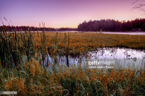 scenic view of lake against sky during sunset - sumpmark bildbanksfoton och bilder