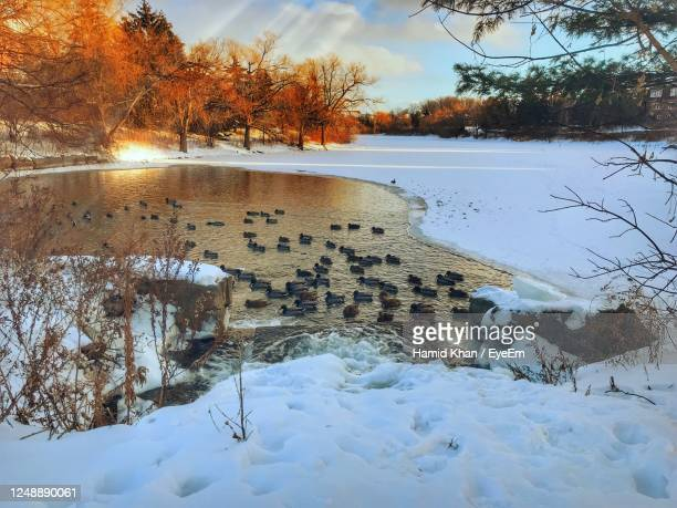 scenic view of lake against sky during winter - 水鳥 ストックフォトと画像