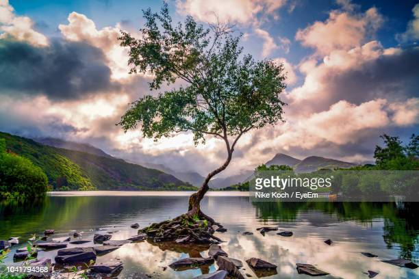 scenic view of lake against sky - snowdonia stock photos and pictures