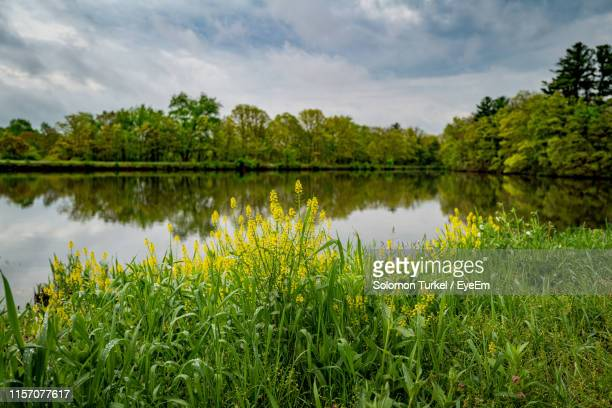 scenic view of lake against sky - greater london stock pictures, royalty-free photos & images