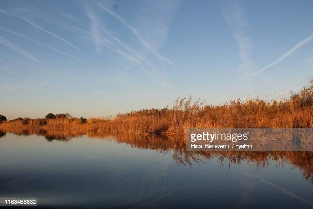 scenic view of lake against sky - reed grass family stock pictures, royalty-free photos & images