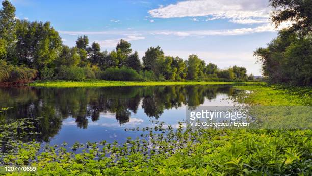 scenic view of lake against sky - arizona bird stock pictures, royalty-free photos & images