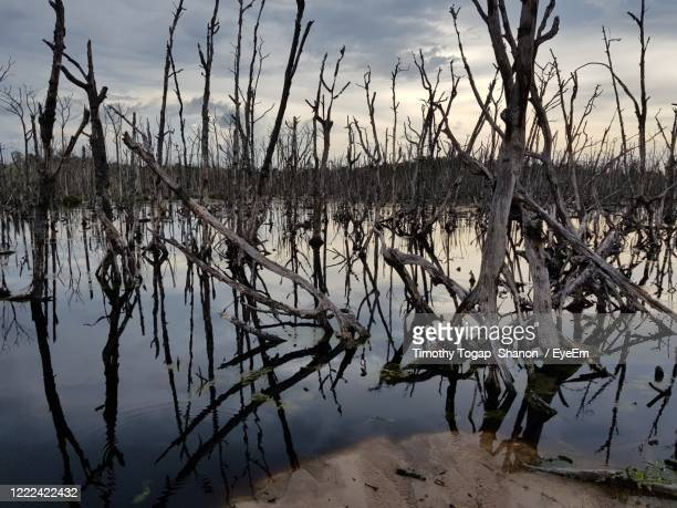 scenic view of lake against sky - marsh stock pictures, royalty-free photos & images