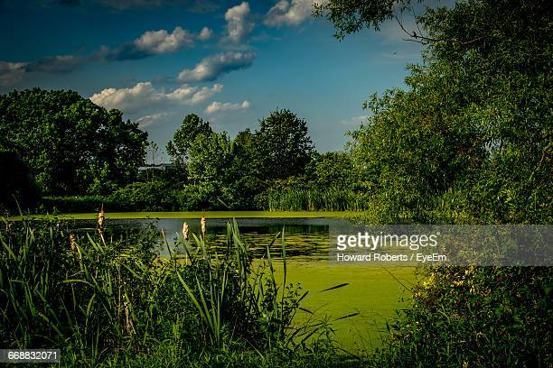 scenic view of lake against sky - montgomery county pennsylvania stock pictures, royalty-free photos & images