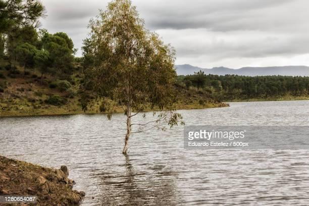 scenic view of lake against sky,zarza de granadilla,extremadura,spain - blanco y negro stock-fotos und bilder