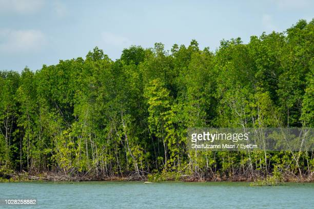 scenic view of lake against trees in forest - shaifulzamri foto e immagini stock