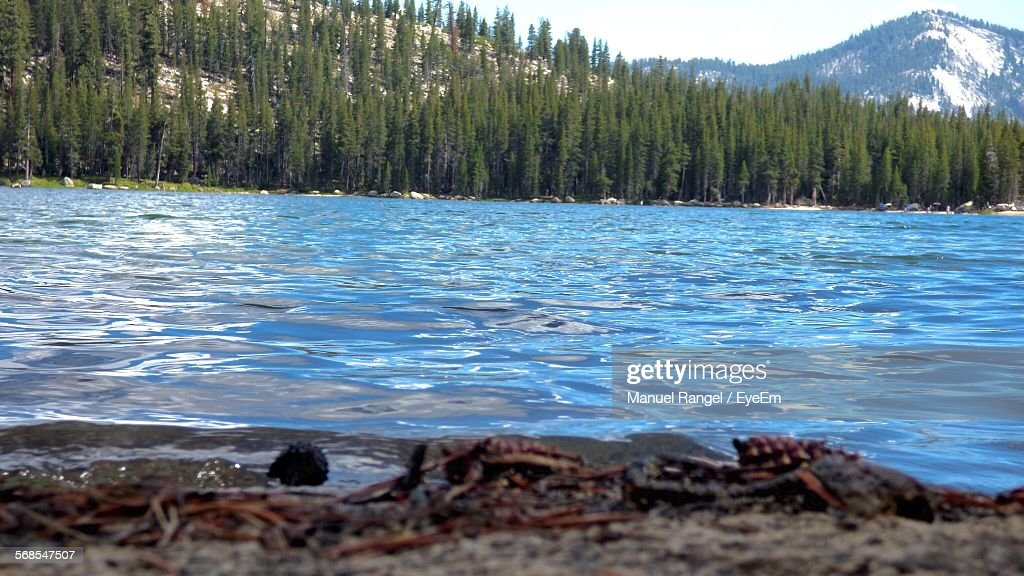 Scenic View Of Lake Against Trees On Mountain : Stock Photo