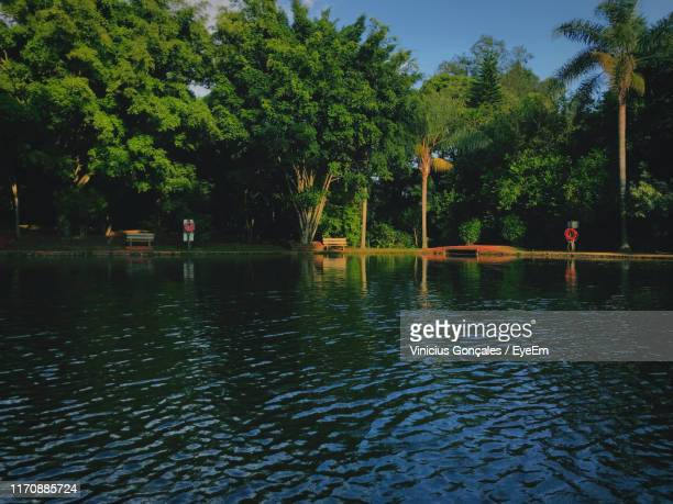 scenic view of lake against trees - sorocaba stock pictures, royalty-free photos & images