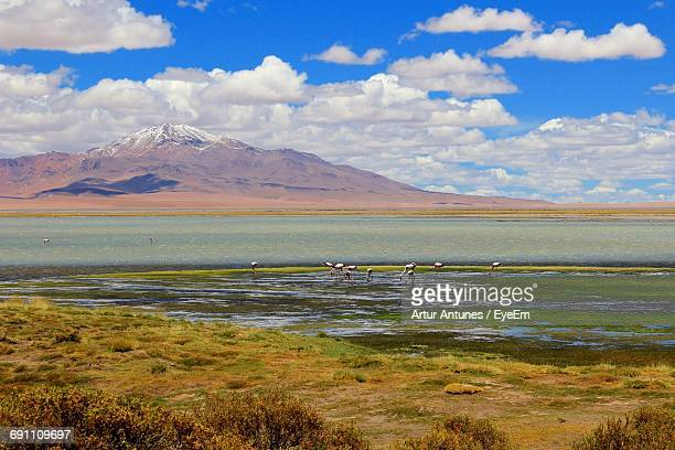 scenic view of lake and mountains - antofagasta region stock photos and pictures