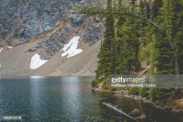scenic view of lake and pine trees - pinaceae stock pictures, royalty-free photos & images