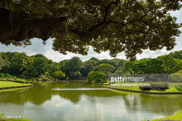 scenic view of lake and trees in park - naruto stock photos and pictures