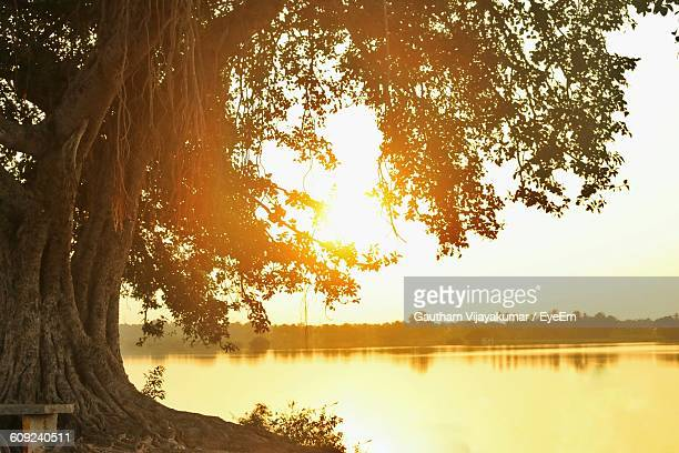 scenic view of lake by banyan tree during sunset - banyan tree stock pictures, royalty-free photos & images