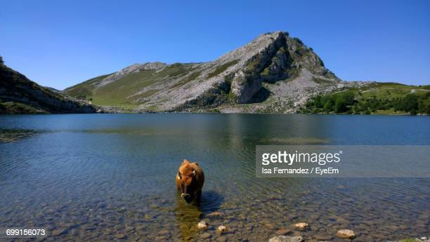 Scenic View Of Lake By Mountain Against Clear Blue Sky