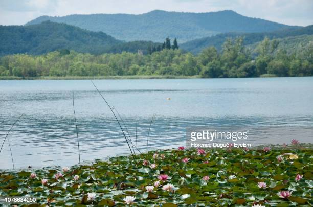 scenic view of lake by mountains - banyoles stock pictures, royalty-free photos & images