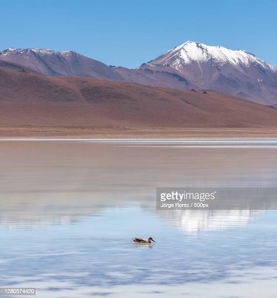 scenic view of lake by snowcapped mountains against sky,potosi department,bolivia - potosí potosí department stock pictures, royalty-free photos & images