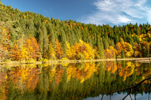 Scenic view of lake by trees against sky during autumn,Germany
