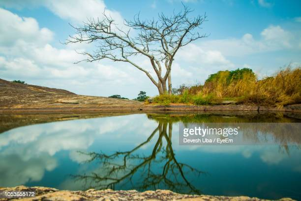 scenic view of lake by trees against sky - nigeria stock pictures, royalty-free photos & images
