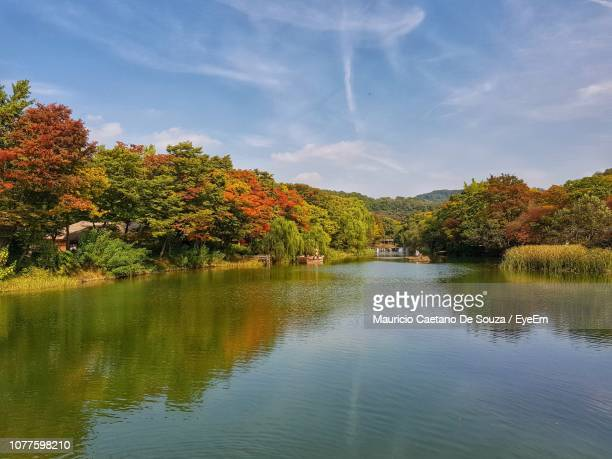 scenic view of lake by trees against sky - mauricio caetano de souza stock photos and pictures