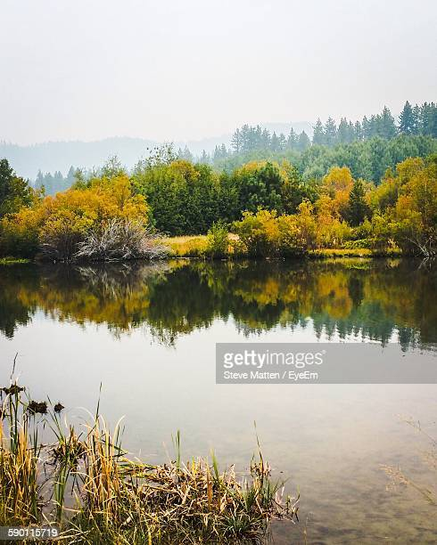 scenic view of lake by trees against sky - steve matten stock pictures, royalty-free photos & images