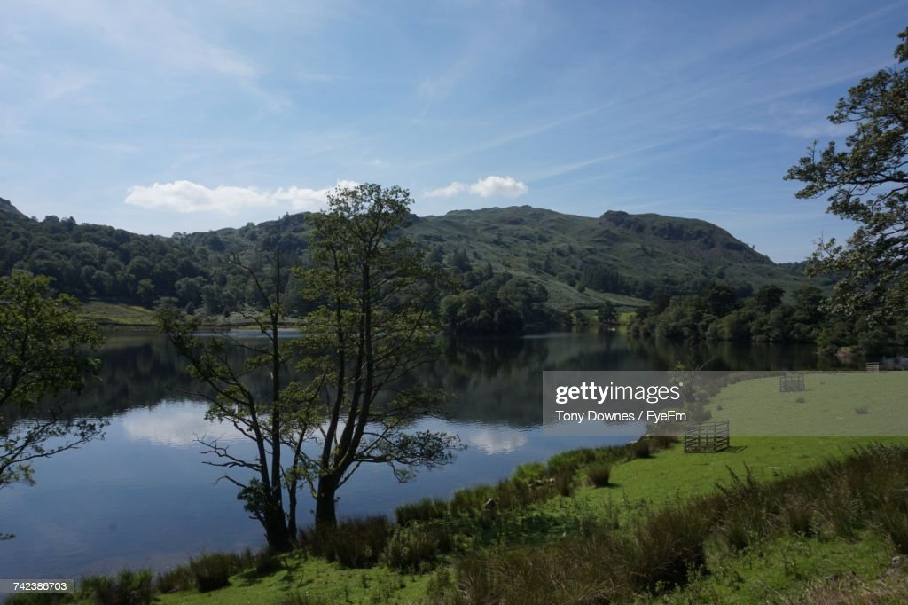 Scenic View Of Lake By Trees Against Sky : Stock Photo