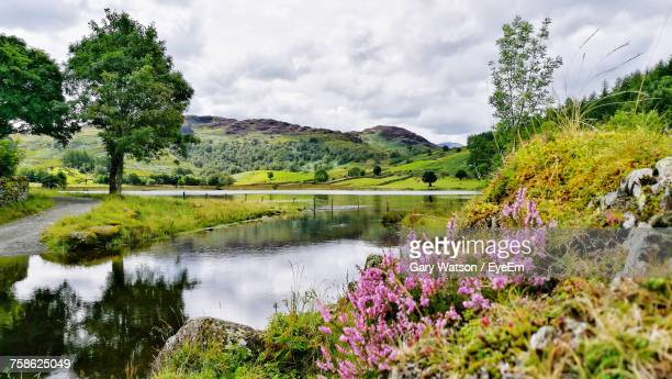 scenic view of lake by trees against sky - cumbria stock pictures, royalty-free photos & images