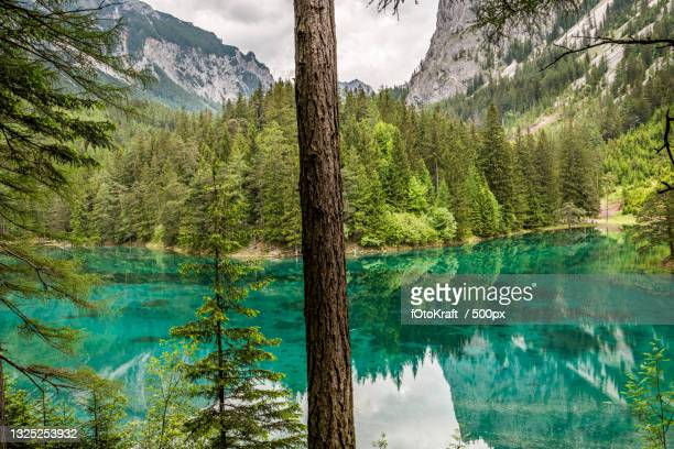 scenic view of lake by trees against sky,austria - baum stock pictures, royalty-free photos & images
