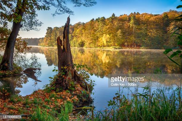 scenic view of lake by trees against sky,germany - collin key stock-fotos und bilder