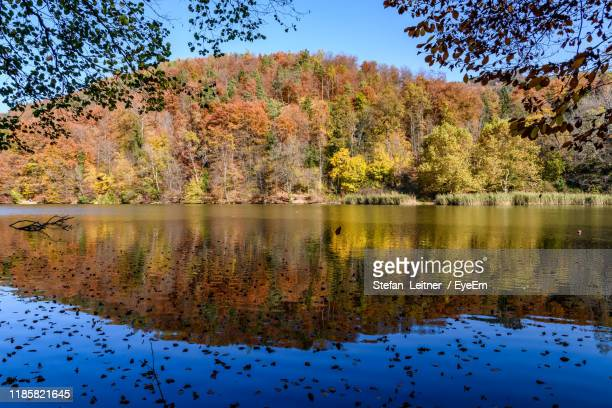 scenic view of lake by trees during autumn - thal austria stock-fotos und bilder