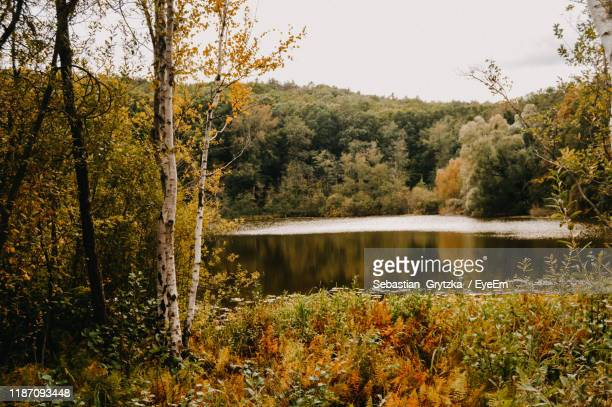 scenic view of lake by trees in forest against sky - köpenick stock pictures, royalty-free photos & images