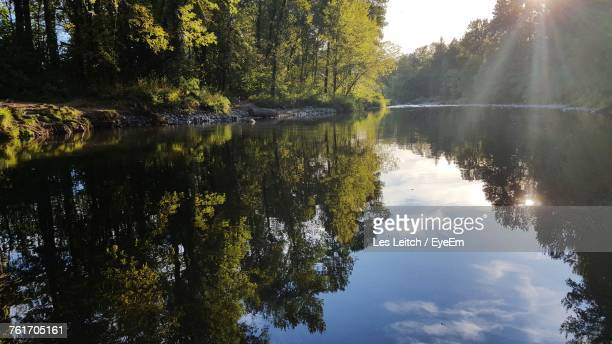scenic view of lake by trees in forest against sky - reflection lake stock photos and pictures
