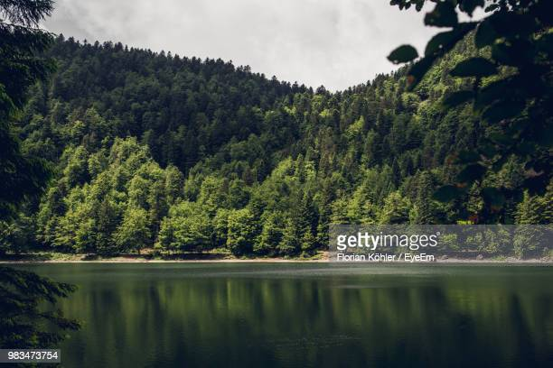 scenic view of lake by trees in forest against sky - lorraine stock pictures, royalty-free photos & images