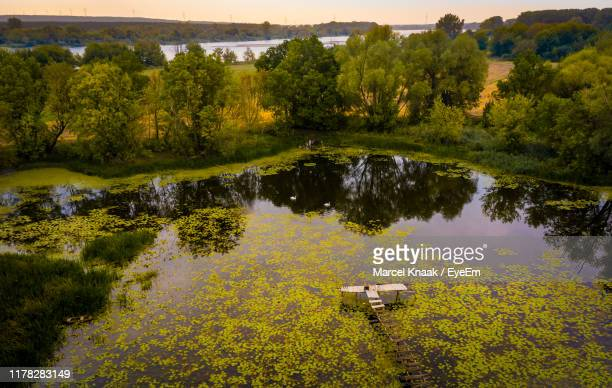 scenic view of lake by trees - bydgoszcz stock pictures, royalty-free photos & images