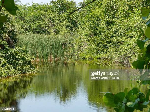 scenic view of lake by trees - lily carter stock pictures, royalty-free photos & images
