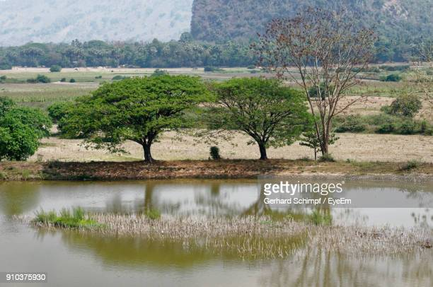 scenic view of lake by trees - gerhard schimpf stock pictures, royalty-free photos & images