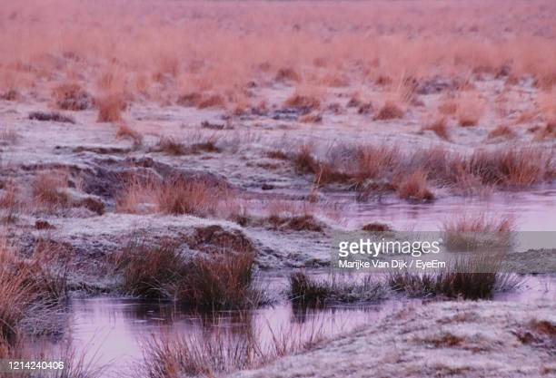 scenic view of lake during winter - van dijk stock pictures, royalty-free photos & images