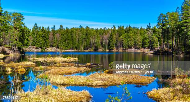 scenic view of lake in forest against blue sky - eriksen foto e immagini stock