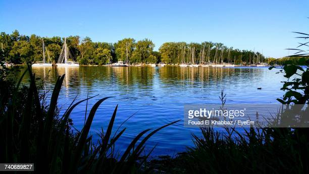Scenic View Of Lake In Forest Against Clear Blue Sky
