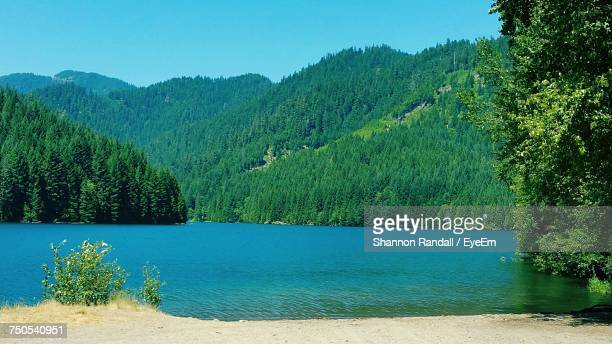 scenic view of lake in forest against clear blue sky - lowell massachusetts stock pictures, royalty-free photos & images