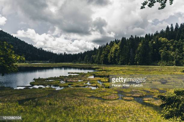 scenic view of lake in forest against cloudy sky - sumpf stock-fotos und bilder