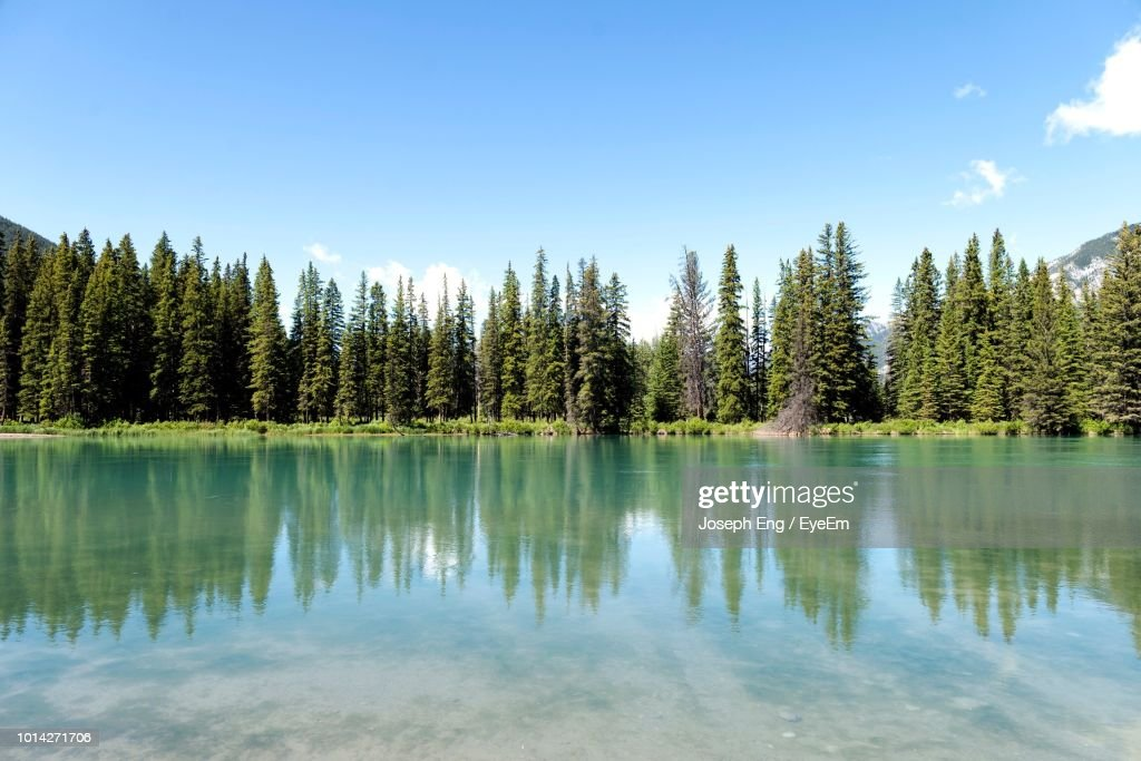 Scenic View Of Lake In Forest Against Sky : Stock Photo