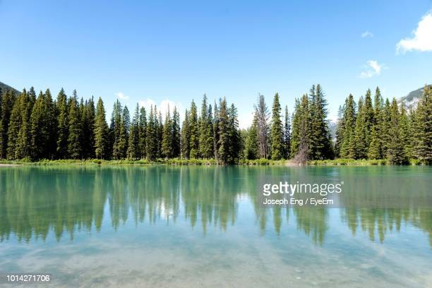 scenic view of lake in forest against sky - reflection lake stock photos and pictures