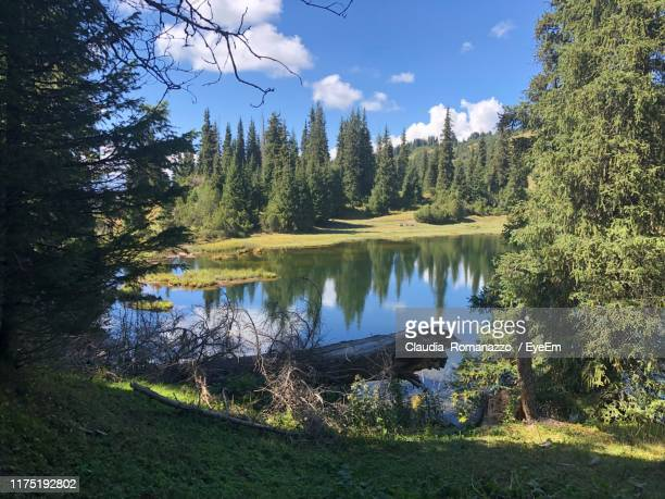 scenic view of lake in forest against sky - claudia romanazzo foto e immagini stock